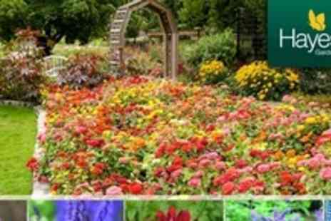Hayes Garden World - 24 Herbaceous, Perennial Potted Plants - Save 71%