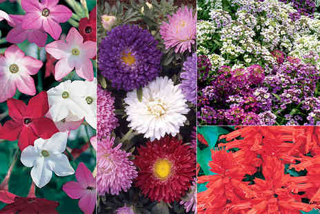 Gardening Direct - Set of 180 mixed summer bedding plants - Save 62%