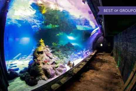 Skegness Aquarium - Skegness Aquarium Ticket for One Child, One Adult or Family of Four - Save 21%