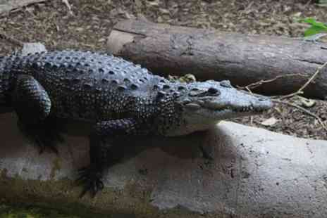 Hemsley Conservation Centre - Crocodile Encounter - Save 0%