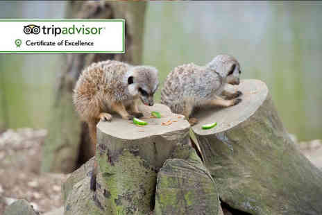 Bridlington Birds of Prey & Animal Park - Meet the meerkat experience for two - Save 55%