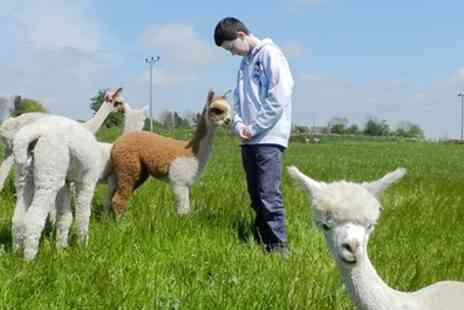 Charnwood Forest - 60 Minute Baby Alpaca Experience and Feed for One or Two - Save 50%