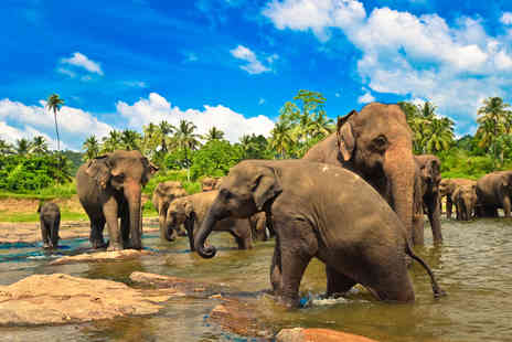 Great Pacific Travels - Seven night Sri Lanka tour including flights, transfers and breakfast - Save 20%