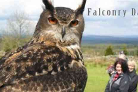 Falconry Days - Three Hour Falconry Activity For Adult and Child - Save 64%