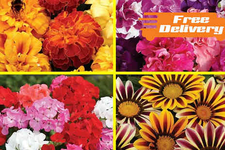 Jersey Plants Direct - 280 Bedding Plants Lucky Dip With Free Delivery - Save 0%