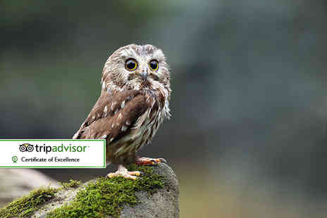North Somerset Bird of Prey Centre - Bird of prey experience and cream tea for two - Save 57%