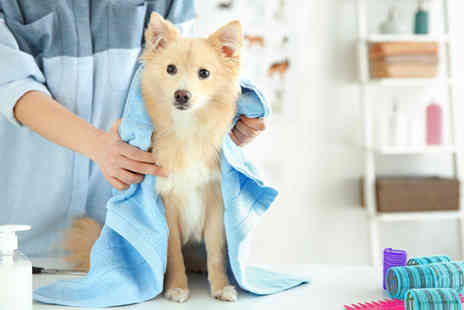 Blue Mountain Training - Dog Grooming Course - Save 93%