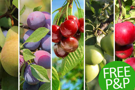 PlantStore - Fruit Tree Orchard Collection With Free Delivery - Save 60%