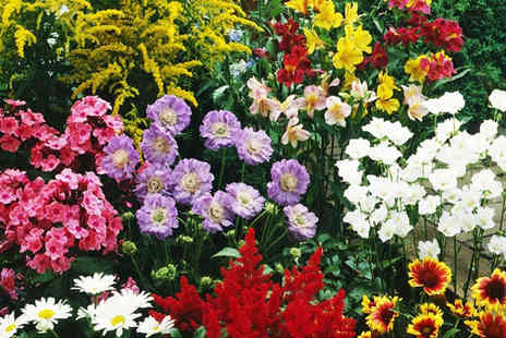 PlantStore - Ten XL Perennial Border Plants Include FREE DELIVERY - Save 57%