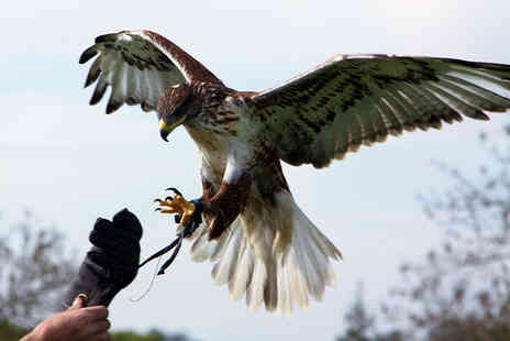 Yarak Birds of Prey Centre - Birds of prey experience for one or two - Save 44%