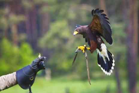Fixter Falconry - Falconry Experience for One, Two or Family of Four - Save 56%