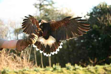 Raptor World - Two hour bird handling experience for one person - Save 62%