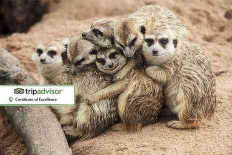 Willow Tree Family Farm - One hour meet the meerkats experience and farm entry for two - Save 46%