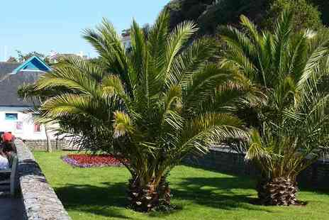 Blooming Direct - Two extra large Canary Island palm trees - Save 45%