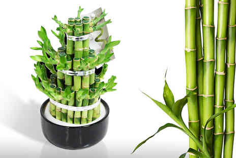 flowers delivery 4 u - Lucky bamboo carousel in a ceramic pot - Save 47%
