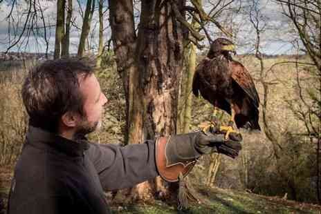 North East Falconry - One hour hawk walk experience for one or family of four - Save 68%