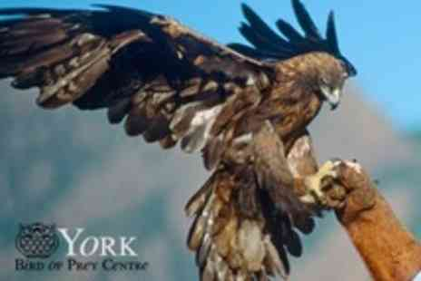 York Bird of Prey Centre - Admission For Two or Family of Five - Save 60%