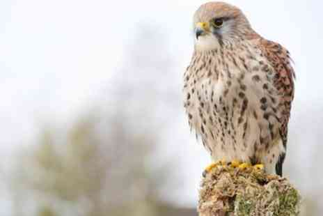 Shropshire Falconry - Childrens Workshop and Falconry Experience - Save 0%
