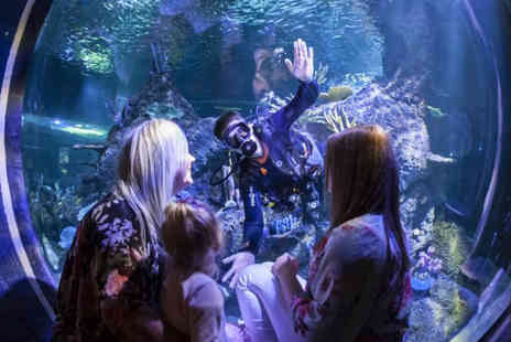 Skegness Aquarium - Swimming with sharks experience for one child or adult including entry to Skegness Aquarium with one spectator - Save 13%