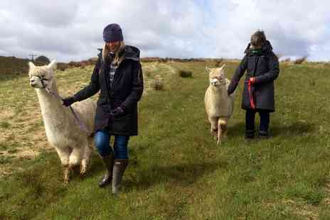 Netherfield Farm - Two hour alpaca experience including a one hour trek - Save 36%