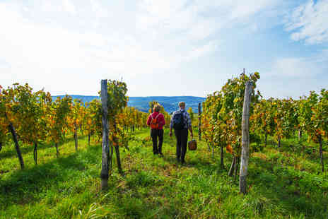Kerry Vale Vineyard - Self guided tour of Kerry Vale Vineyard for one person with wine tasting plus tea and cake - Save 0%