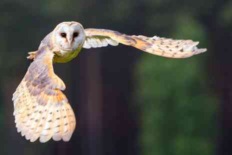 Knockhatch Adventure Park - Two Hour Owl Experience - Save 0%