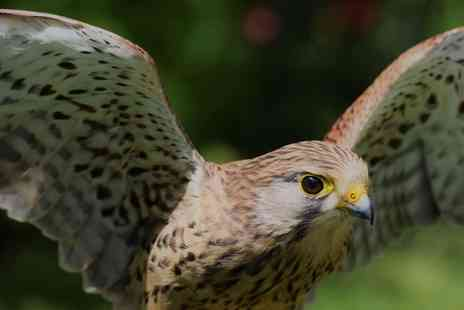 UK Owl and Raptor Displays - Junior or Adult Raptor Experience Pass for One or Two - Save 0%