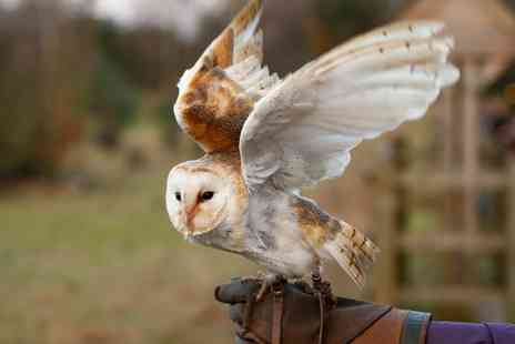 Fixter Falconry - Owl Handling Experience - Save 0%