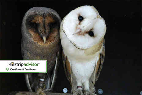 Kirkleatham Owl Centre - Twilight owl experience for two people - Save 55%