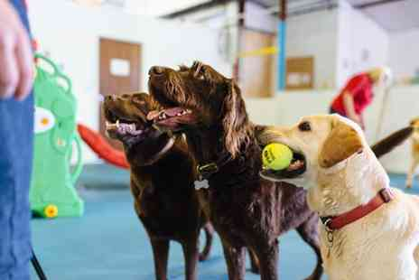 Lincoln Canine Creche - Five days of doggy day care - Save 64%