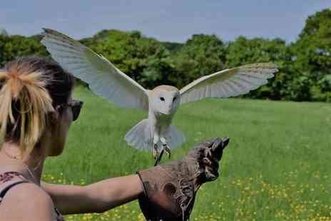 UK Owl and Raptor Displays - Owl experience for one - Save 63%