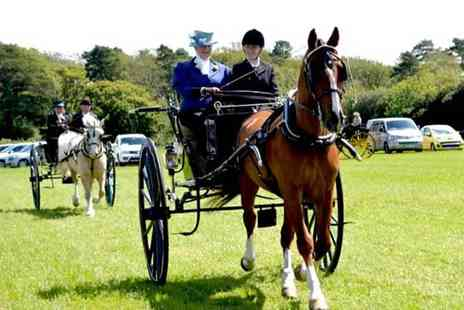 Buyagift - Learn to drive a horse and carriage at Easter Hall Park for one hour - Save 0%