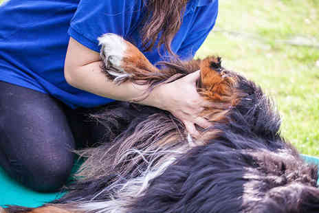 Holly & Hugo - ICOES accedited online animal physical therapy course - Save 89%