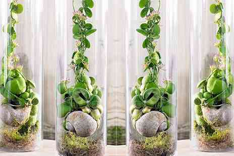 Groupon Goods Global GmbH - One or Two Unusual Snaily Dischidia Plants - Save 43%