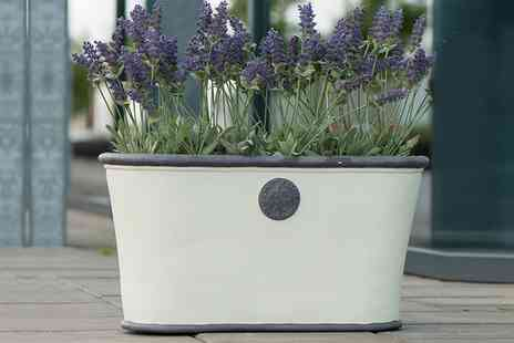 Groupon Goods Global GmbH - Two Royal Elite Planters in Choice of Colour - Save 0%