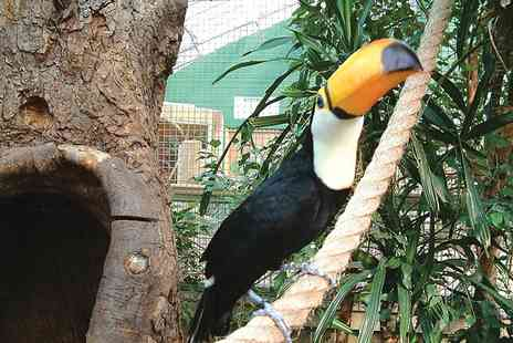 M&Ds Theme Park - Entry to Amazonia for two - Save 52%