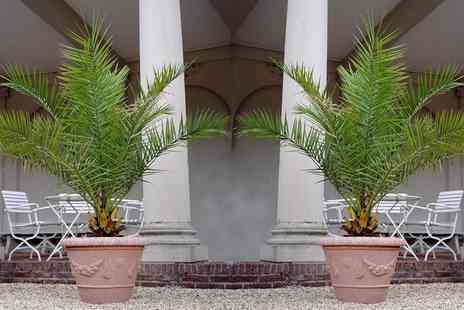 Groupon Goods Global GmbH - One, Two or Four Canary Date Palm Trees - Save 48%