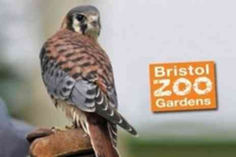 Bristol Zoo Gardens - Bristol Zoo Birds of Prey Experience For Two Plus Full Day Entry - Save 61%