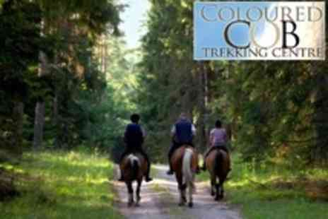 Coloured Cob Trekking Centre - One Hour Horse Riding Lesson - Save 57%