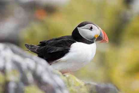 The Scottish Seabird Centre - Entry for two adults or family of four to the award winning Scottish Seabird Centre - Save 66%