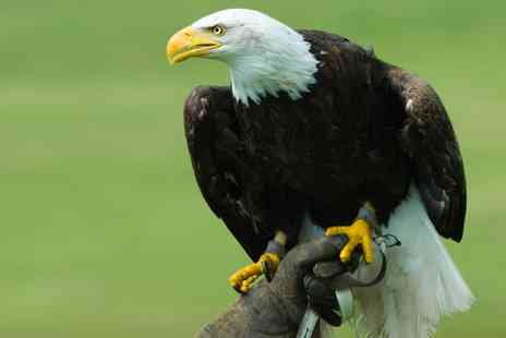 Birds of Prey Centre - American Eagles Experience for Up to Four - Save 73%