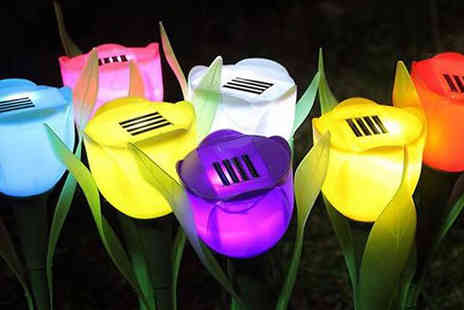 Black Sheep - 8 Garden Solar Tulip Lights - Save 38%