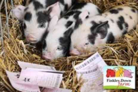 Finkley Down Farm - Farmyard Visit For Family of Six - Save 57%
