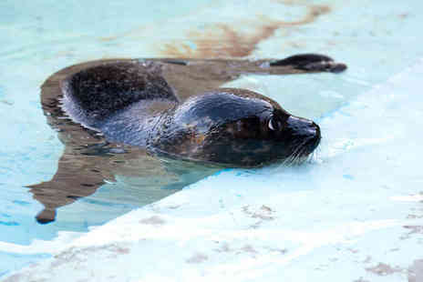 St Andrews Aquarium - Family day pass for two adults and two children - Save 57%
