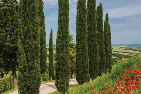 Groupon Goods Global GmbH - Up to Six Hardy Italian Cypress Trees with Optional Planters - Save 40%