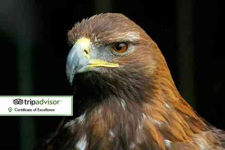 Falconry Experiences - Three hour falconry and owl handling experience for one person - Save 62%
