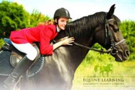 Equine Learning - Two Horse Riding Group or Private Lessons - Save 73%