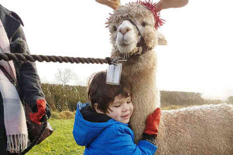 Charnwood Forest - 60 minute Christmas walking with alpacas experience for one with a mulled wine - Save 53%