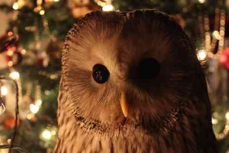 Shropshire Falconry - Winter Owl Experience with Seasonal Treats - Save 58%