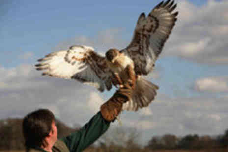 Raptor World - Two hour bird of prey experience and admission for two to the centre - Save 69%